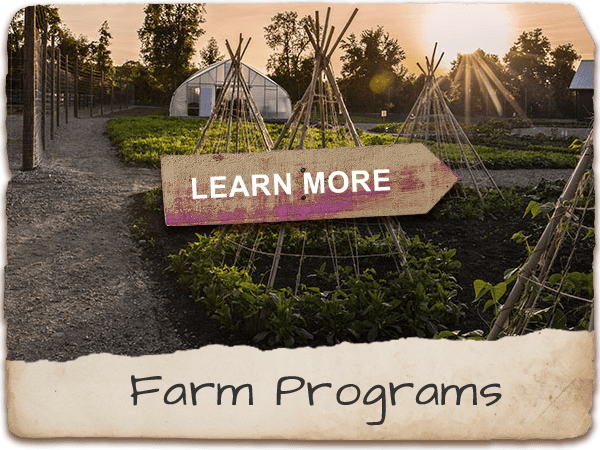 Learn more about Farm Programs